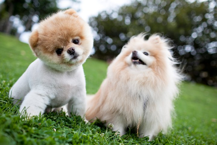 Top 10 Cutest Puppies Ever