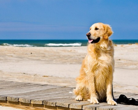 Top 10 Dog Breeds For Families
