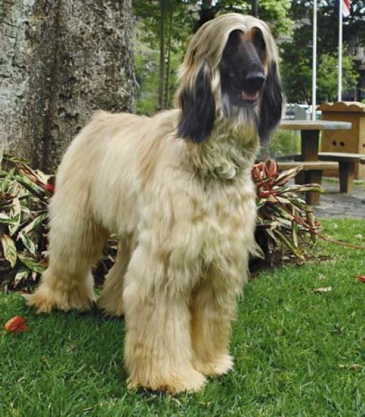 Top Dog Breeds 2013