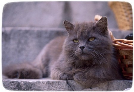 Types Of Cat Breeds With Pictures