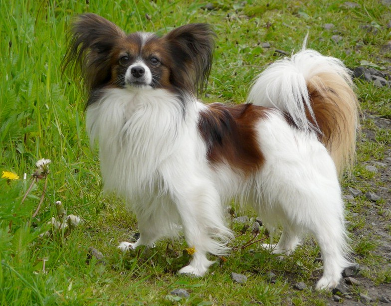 Types Of Small Dogs Breeds
