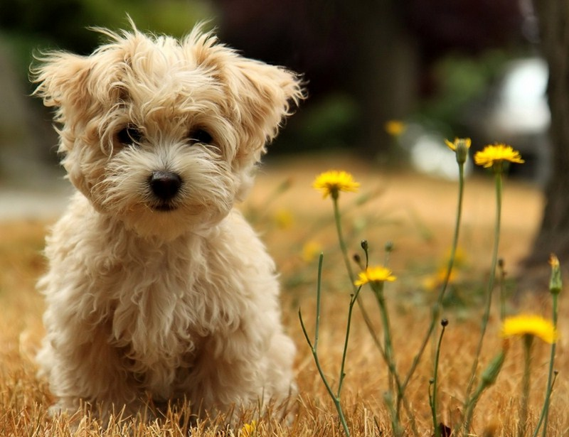 Types Of Small Dogs With Long Hair
