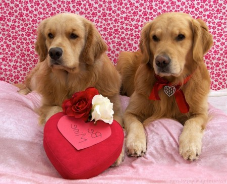Valentine's Day Dog Photo Contest