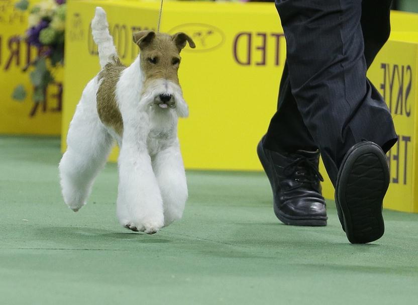Westminster Dog Show Sky