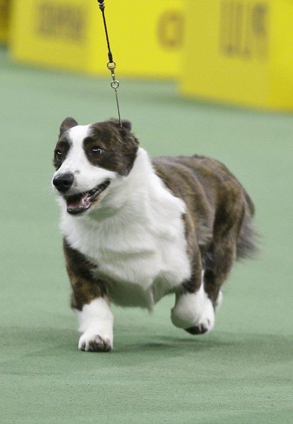 Westminster Dog Show Winner 2014