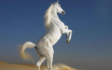 White Horse Prophecy In The Bible