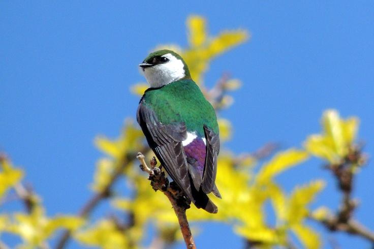 Wild Bird Center Boulder