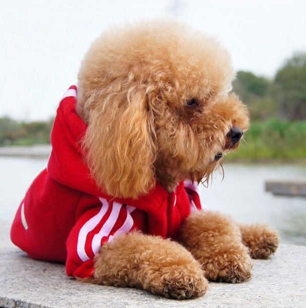 Winter Clothes For Dogs