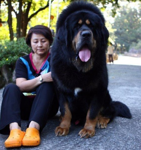 World Largest Dog Breed List