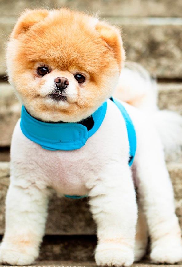 World's Cutest Dog 2013