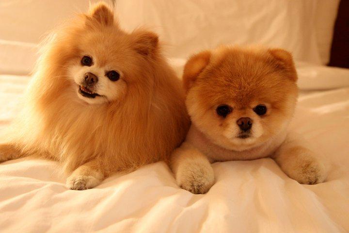 Worlds Cutest Dog Breed