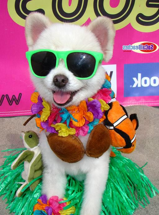 World's Cutest Dog Contest