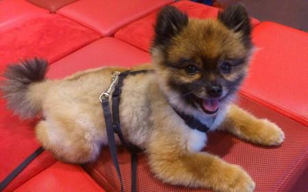 World's Smallest Dog Breeds List