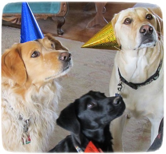 Adopt A Pet Birthday Party