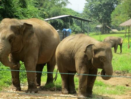 Adopt An Elephant San Diego Zoo