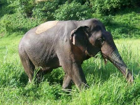 Adopt An Elephant Thailand
