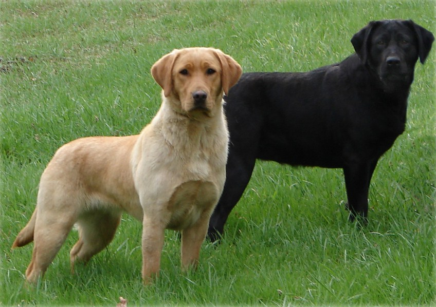 American Police Dog Breeds