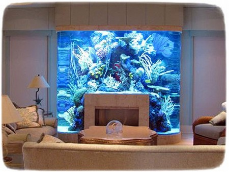 Awesome Saltwater Fish Tanks