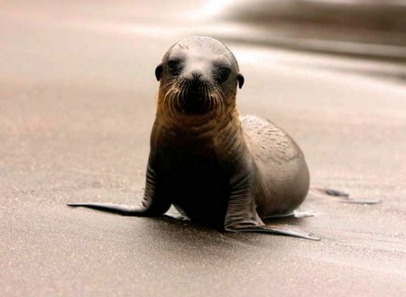 Baby Sea Lion On Boat