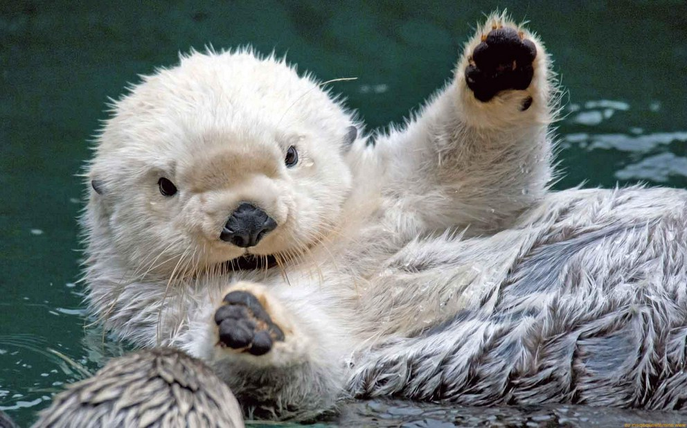 Baby Sea Lion Wallpaper