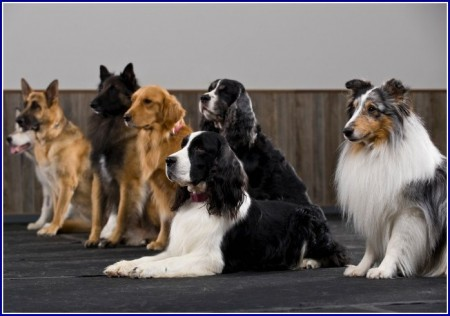 Best Dog Breeds For Apartments And Children