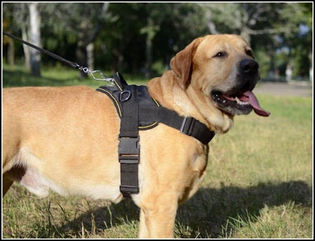 Best Dog Leash For Running