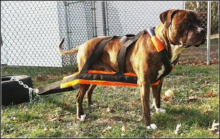 Best Dog Leashes For Pulling
