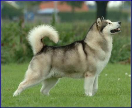 Best Friendly Dog Breeds