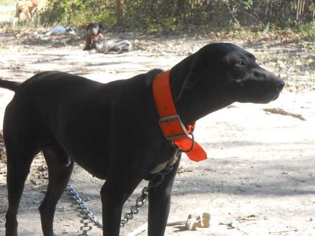 Best Hunting Dogs For Deer