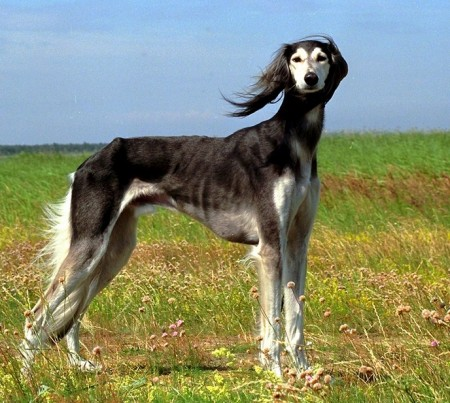 Best Hunting Dogs For Families