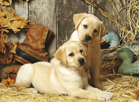 Best Hunting Dogs For Kids
