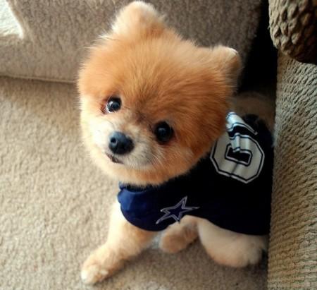 Best Short Hair Dogs