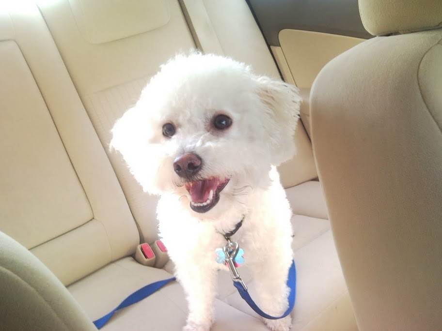 Best Small Dogs For Kids Non Shedding