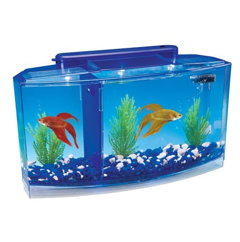 Betta Fish Tanks Amazon