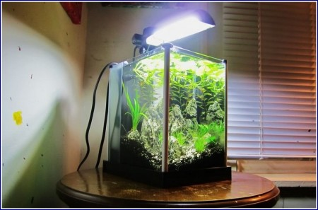 Betta Fish Tanks On Wall