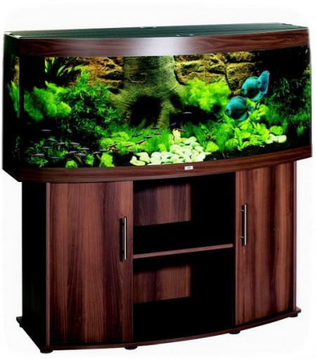 Betta Fish Tanks Uk