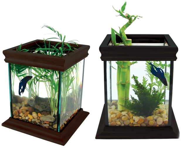 Betta Fish Tanks With Bamboo