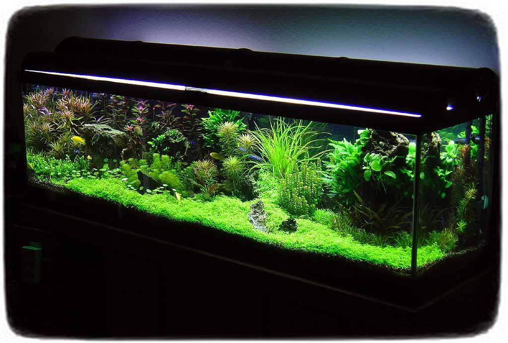 Betta Fish Tanks With Live Plants