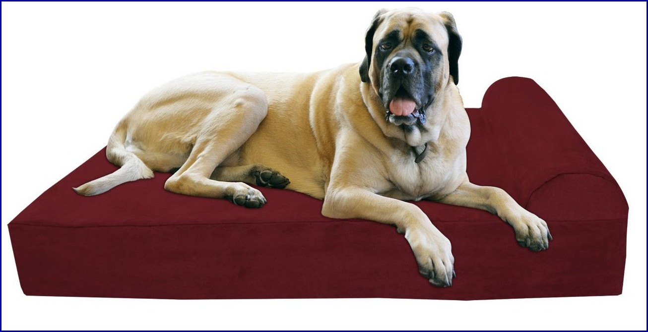 Big Dog Beds For Great Danes