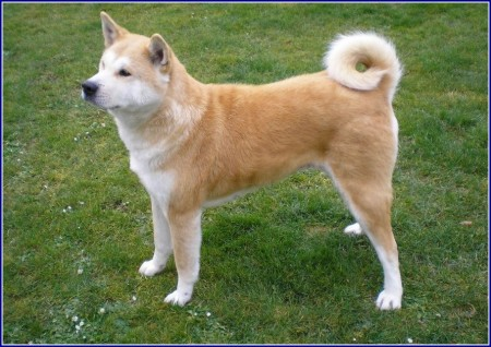 Big Friendly Dog Breeds