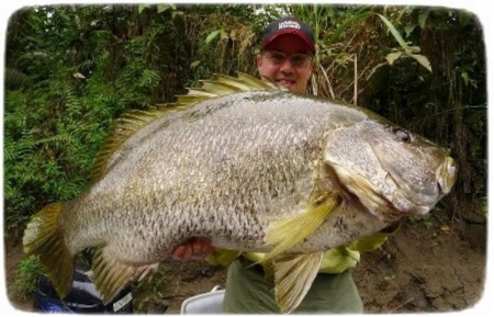 Biggest Fish In The World Ever Caught
