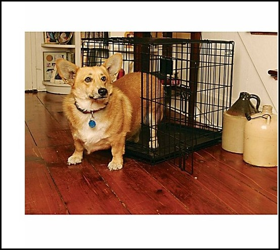 Black Wire Dog Crate
