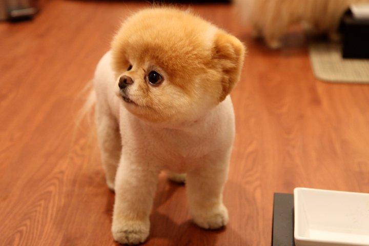 Boo The Dog Breeder