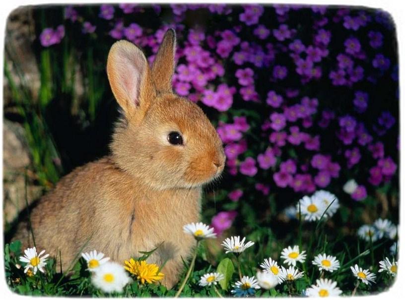 Bunny Rabbits As Pets