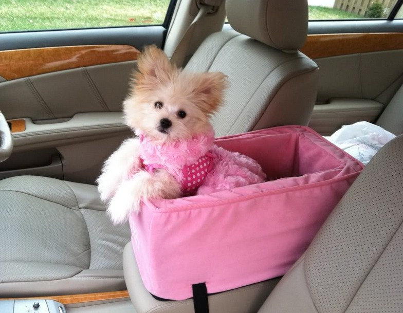 Car Seats For Dogs Safety