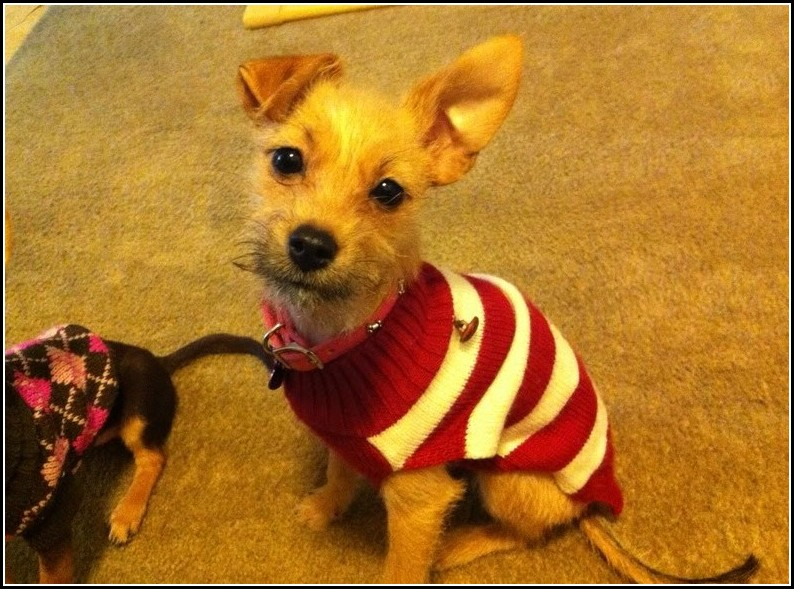 Chilly Dog Sweaters Canada