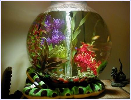 Cloudy Fish Tank Fish Dying