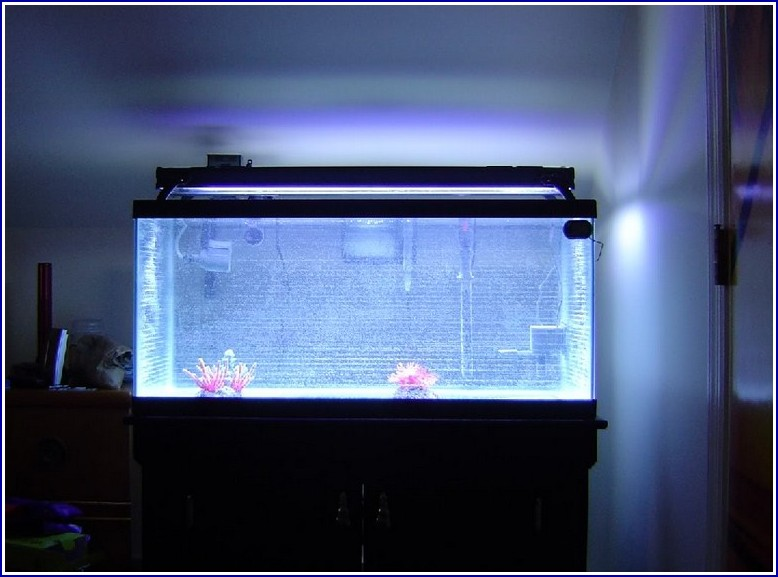 Cloudy Fish Tank Water