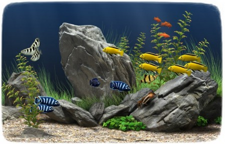 Cold Water Fish For Aquariums