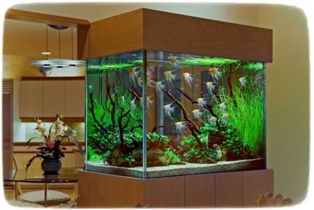 Cool Fish Tanks Decorations